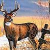 Пазл: Олень (Alone deer puzzle)