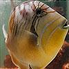 Пятнашки: Аквариумная рыбка (Weird Aquarium fish slide puzzle)