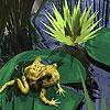 Пазл: Лягушка (Little dizzy frog puzzle)