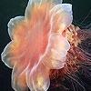 Поиск чисел: Морские животные (Sea Animals hidden numbers)