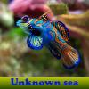 Поиск предметов: Неизвестное море (Unknown sea. Find objects)