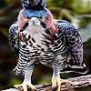 Пятнашки: Пугливая птица (Timid bird slide puzzle)