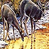 Пазл: Олени на реке (Lovely deers in the river puzzle)