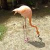 Пазл: Фламинго 2 (Jigsaw: Flamingo 2)
