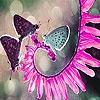 Пазл: Бабочки и цветок (Butterflies and blossom slide puzzle)