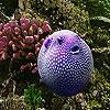 Пятнашки: Пурпурная рыбка (Oceanic purple fish slide puzzle)