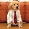 Пазл: Забавные животные (Funny Animals Puzzle)