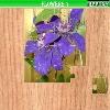 Пазл: Цветы 7 (Flowers 7)