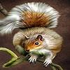 Пазл: Акробат (Acrobat squirrel puzzle)