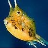 Пятнашки: Пухлая рыбка (Podgy fish slide puzzle)