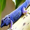Пятнашки: Ящерица на дереве (Reptile on the woods slide puzzle)