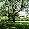 Пазл: Древо Жизни (Tree Of Life)