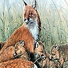 Пазл: Семейство лисички (Fox family in the nature puzzle)