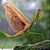 Пятнашки: Богомол (Mayfly in the river slide puzzle)