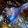 Пятнашки: Птичка на речке (River  and blue bird slide puzzle)