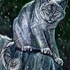 Пятнашки: Темный кот (Dark cat  in the woods slide puzzle)