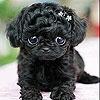 Пятнашки: Черный щенок (Black puppy slide puzzle)
