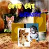 Парные картинки: Котята (Cute Cat Memory)