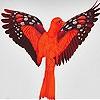 Пятнашки: Фантастическая птица (Lonely fantastic bird slide puzzle)