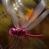Пятнашки: Стрекоза (Naughty fly slide puzzle)