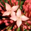 Пазл: Красные цветы (Red Flowers Jigsaw Puzzle)