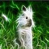Пятнашки: Кролик (Bright rabbit slide puzzle)