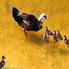 Пятнашки: Утиная семья (Pretty duck family slide puzzle)