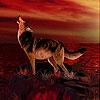 Пятнашки: Волк (Wild dog slide puzzle)