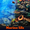 Поиск предметов: Морская жизнь (Marine life. Find objects)