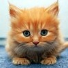 Парные картинки: Котята (Cute Kitten Pairs)