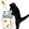 Пазл: Черный кот и красные рыбки (Black cat and red fishes puzzle)