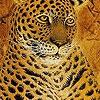 Поиск чисел: Потрясающие тигры (Fabulous tigers hidden numbers)