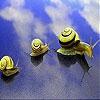Пазл: Ленивые улитки (Lazy snails slide puzzle)