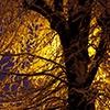 Пазл: Заснеженное дерево (Jigsaw: Snowy Tree)
