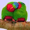 Пятнашки: Две птички (Red lovers slide puzzle)