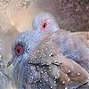 Пятнашки: Жемчужные птицы (Pearl birds slide puzzle)