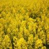 Пятнашки: Желтые поля (Yellow Fields Slider)