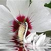Пятнашки: Лебеди (Brilliant swans slide puzzle)