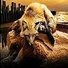 Пятнашки: Лисичка (Tired sleepy fox slide puzzle)