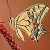 Пятнашки: Бабочка в поле (Butterfly in the field slide puzzle)