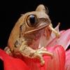 Пазл: Цветочная лягушка (Jigsaw: Flower Frog)