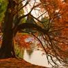 Пазл: Осенняя пора (Jigsaw: Autumn Pond Tree)