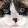 Пазл: Кошечка (Jigsaw: Cat Face)