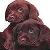 Пазл: Кофейные щенки (Cute coffee dogs puzzle)