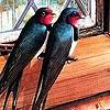 Пазл: Птички в домике (Birds in the house  puzzle)