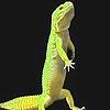 Пазл: Сердитая игуана (Angry iguana puzzle)
