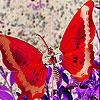 Пятнашки: Красные крылья (Red wings slide puzzle)