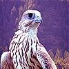 Пятнашки: Фантастические птицы (Fantastic brave bird slide puzzle)