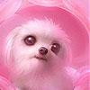 Пятнашки: Розовый щенок (Pink dog puppy slide puzzle)