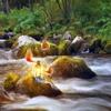 Пазл: Фантастическая река (Jigsaw: River Fantasy)